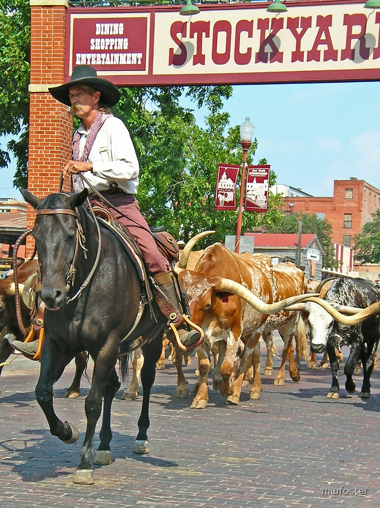 Cattle Drive by mwfoster