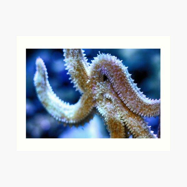 Starfish / Sea star (Close up) Art Print