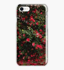 Red camellia flowers blooming in the garden iPhone Case/Skin