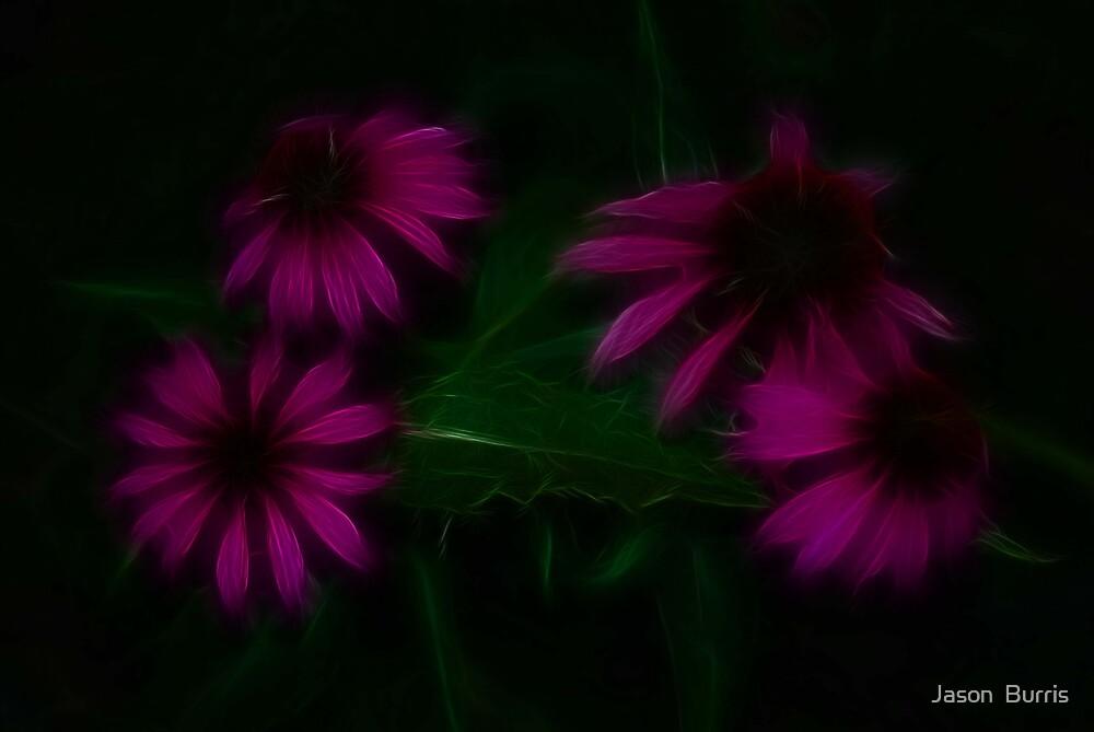 purple daises by Jason  Burris