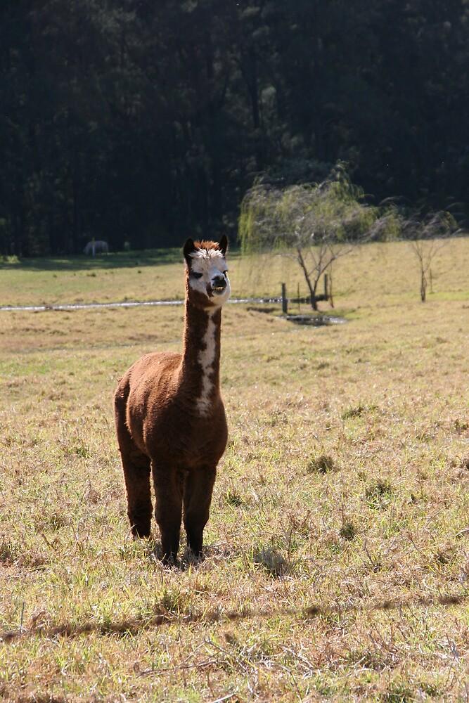 alpaca by kimtruong