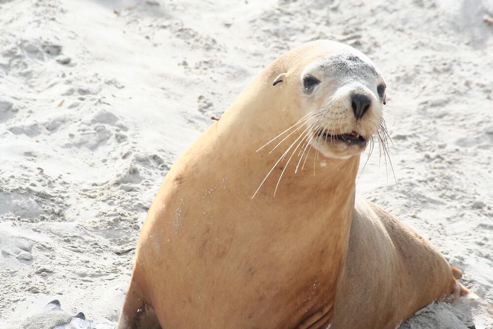 Sea Lion by VickiM