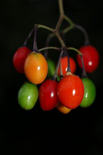Rainbow berries by cml16744