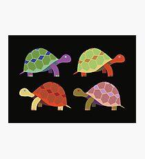 Coloured Turtles Photographic Print