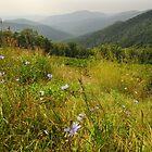 Blue Ridge Mountains.of Virginia by Billlee