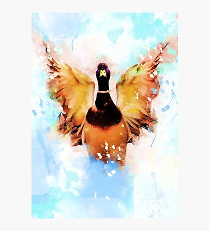 duck art #duck #animals Photographic Print