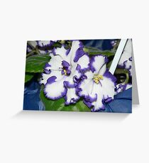 """African Violet - """"Epson Magic"""" Greeting Card"""