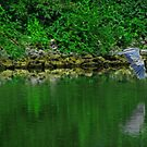 Blue Heron by solareclips~Julie  Alexander