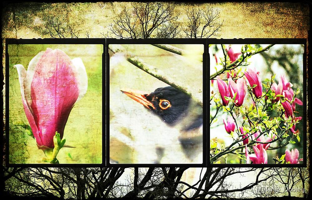 Blackbird by Melanie  Dooley