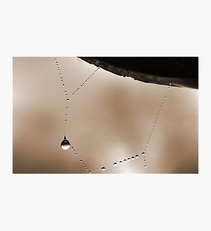 Spider Web Dew 1 Photographic Print