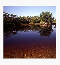 Mangrove  Photographic Print
