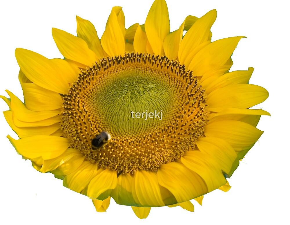 Flower and Bee by terjekj