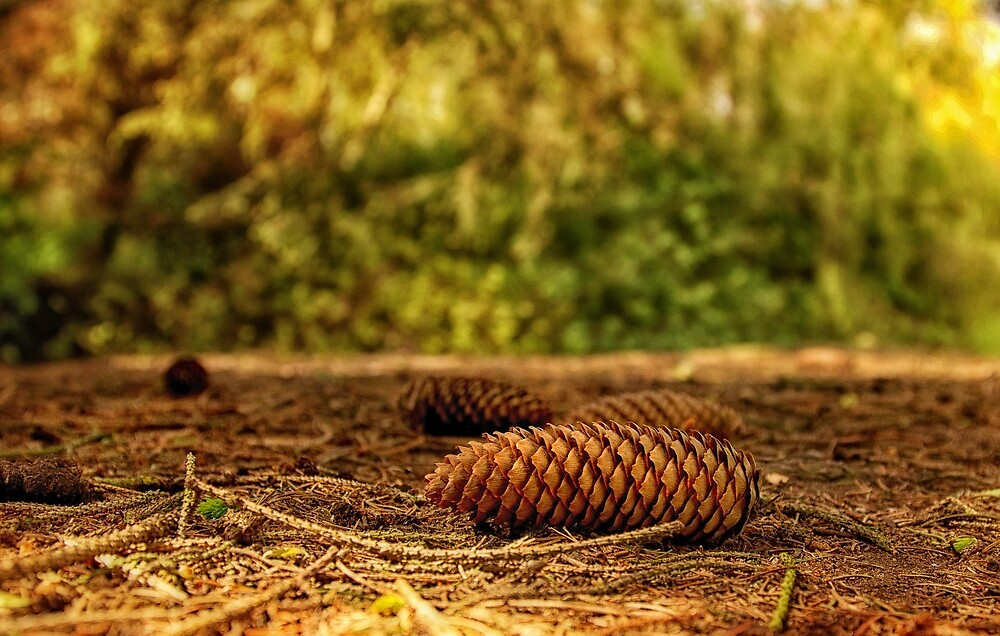 Nature's Pine Cones by StephenRphoto