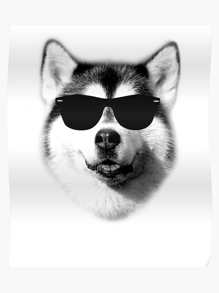 407eb72a818 Cool Siberian Husky with Sunglasses