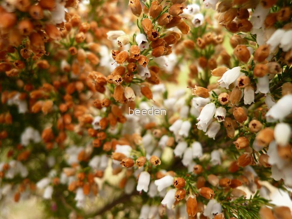 Unknown Flower 1 by beeden