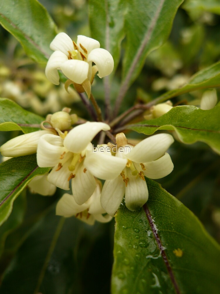 Unknown Flower 2 by beeden
