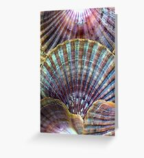 Vintage Sea Shells Revisited Greeting Card