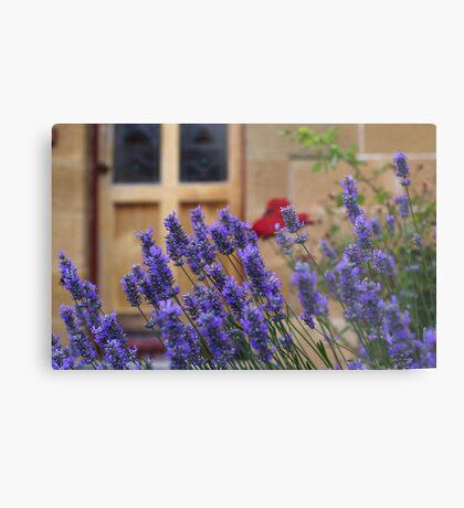 lavender gardens Metal Print