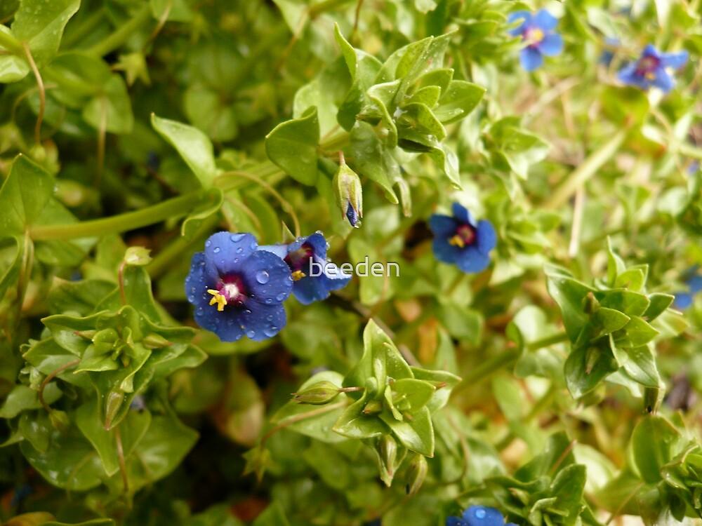 Unknown Flower 6 by beeden