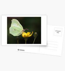 Brimstone Butterfly Postcards