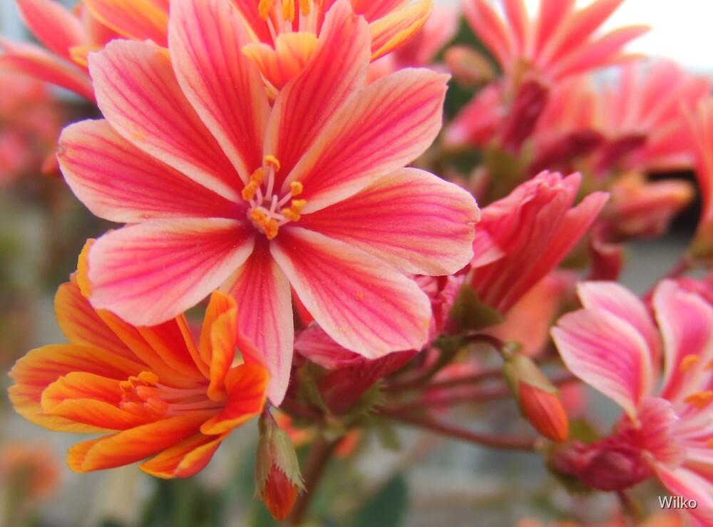 Orange flowers by Wilko