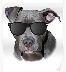 Cool Pitbull with Sunglasses - American Pit Bull Gift Poster