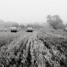 Foggy and Dull by Chris Charlesworth