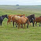 Dartmoor Ponies by Graeme  Hyde