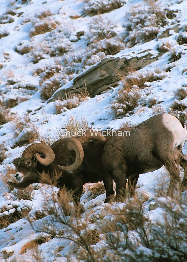BIGHORN RAMS by Chuck Wickham