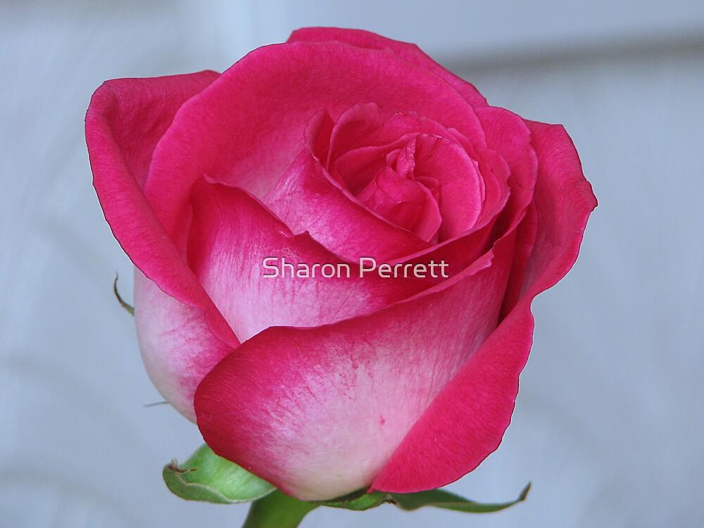 My Rose by Sharon Perrett