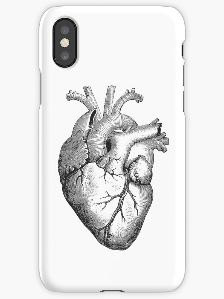Anatomisches Herz\