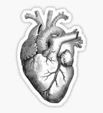 Anatomisches Herz Sticker