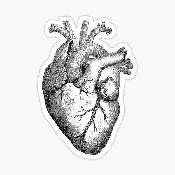 Anatomical Heart Sticker