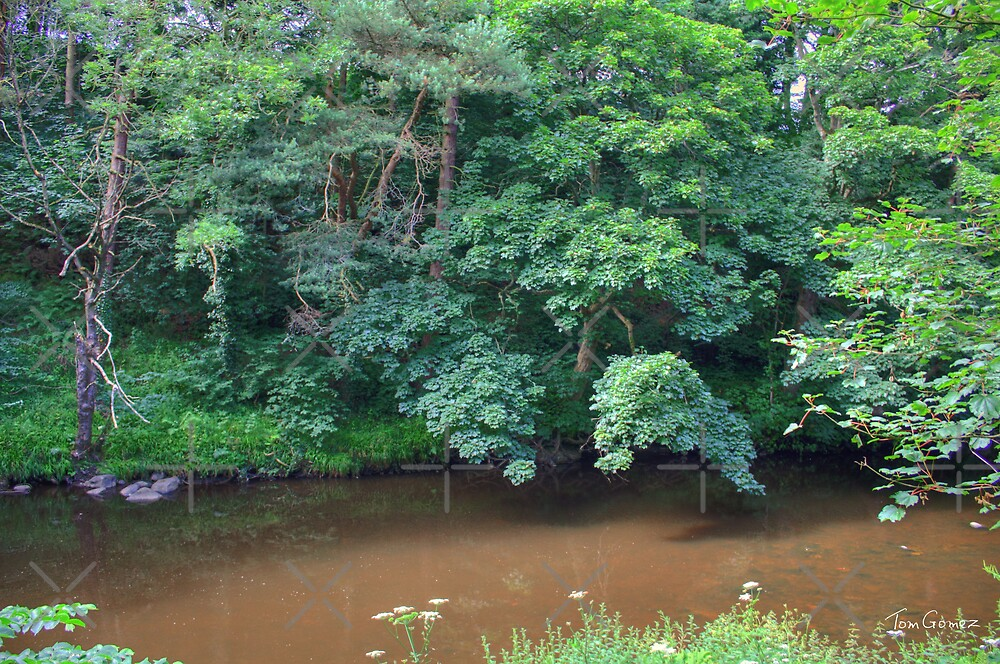 River Almond by Tom Gomez
