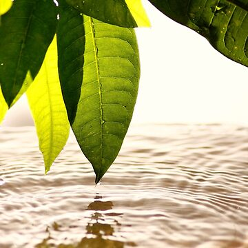 Leaves and Water by junpinzon