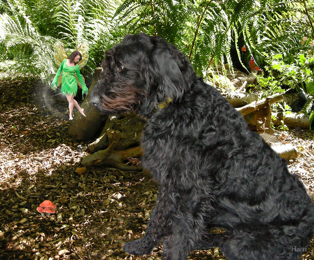 Buster Meets A Forest Fairy by Harri