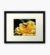 Matching insect Framed Print