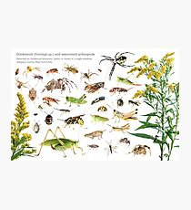 Goldenrod and Associated Arthropods Photographic Print