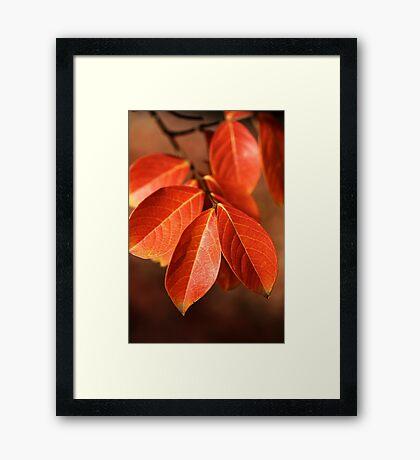 Autumn Richness Framed Print