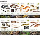 Salamanders of New York by Dave Huth