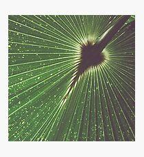 Green Starburst Photographic Print