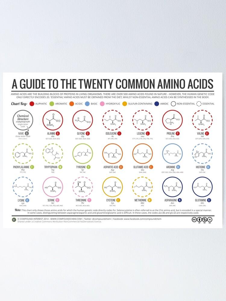 Alternate view of 20 Amino Acids Poster
