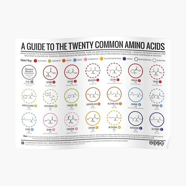 20 acides aminés Poster