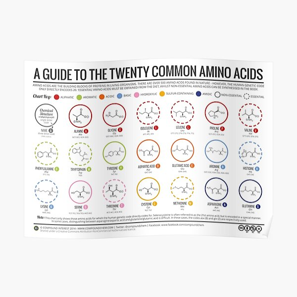 20 Amino Acids Poster