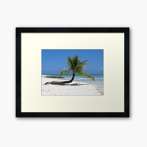 Palme - Insel Saona in der Karibik Gerahmter Kunstdruck