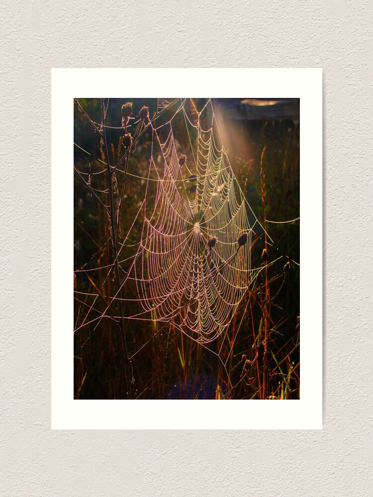 Alternate view of Web of Dreams Art Print