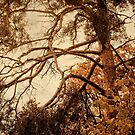 Autumn Trees No. 7 by Barry W  King