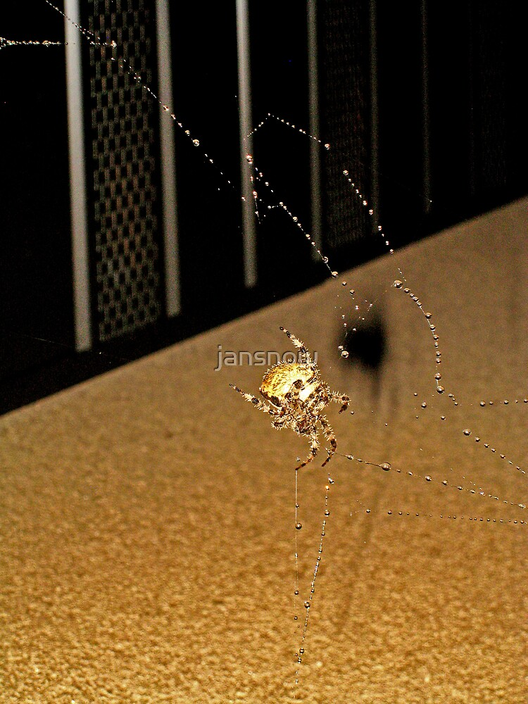 Biff the Spider by jansnow
