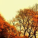 Autumn Trees No. 9 by Barry W  King