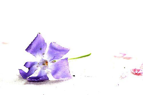 Studio Flowers #2 by Kate Hore